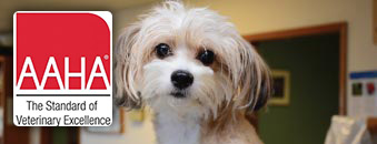 AAHA Accredited Animal Hospital in Seattle