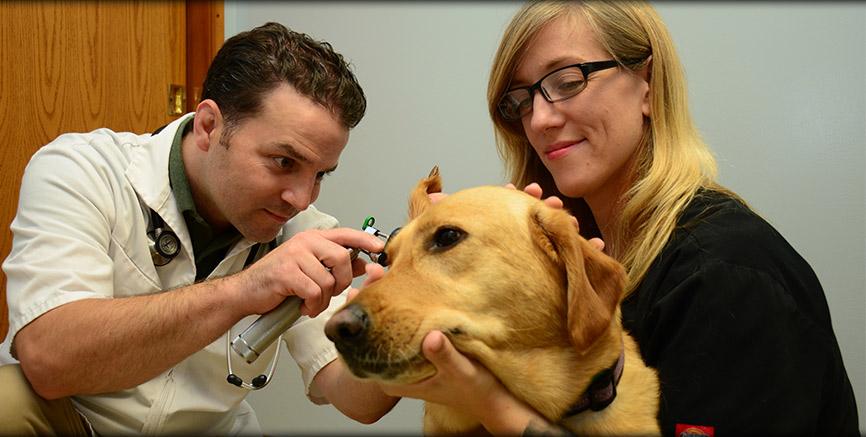 Preventive Medicine at Greentree Animal Hospital