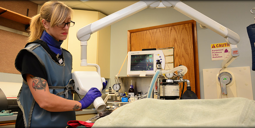 Greentree Animal Hospital provides digital dental radiology