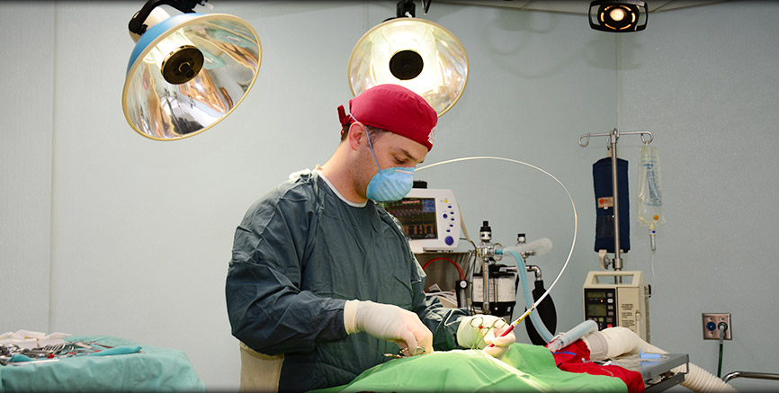 Dr. Kleven performs laser surgical procedures at Greentree Animal Hospital