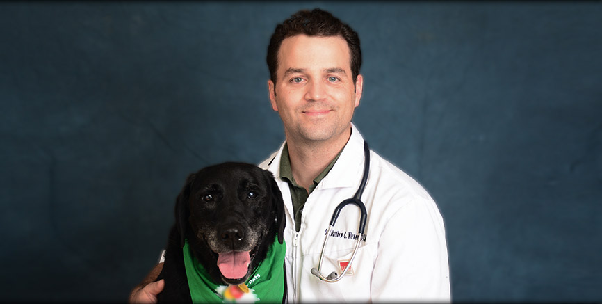 Greentree Animal Hospital, veterinary care in SW Seattle