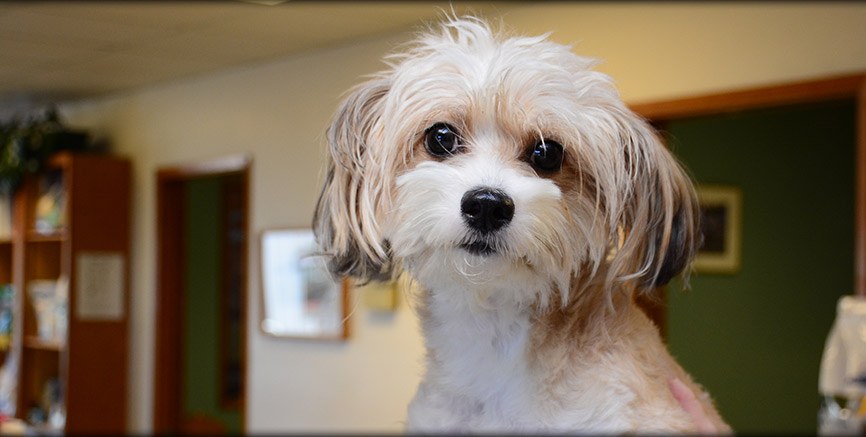 Greentree Animal Hospital Resources for Dog Owners